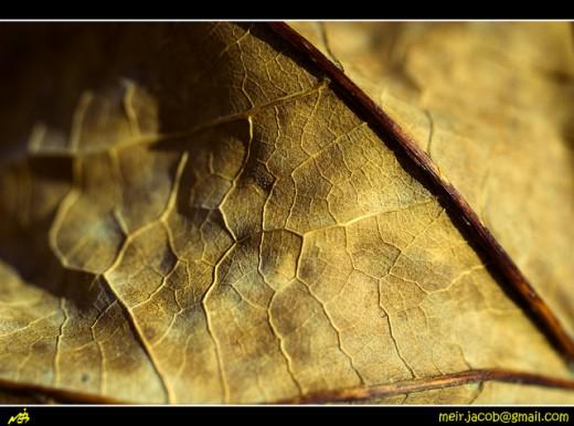 Dry leaf telling a story...