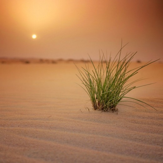 30 Most Beautiful Desert Wallpapers to Free Download - DotCave