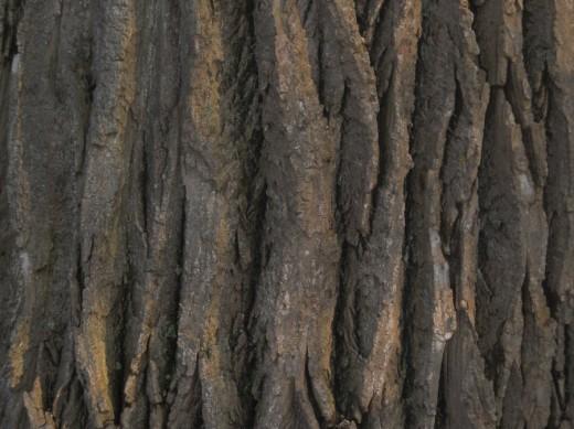 Bark Free Texture