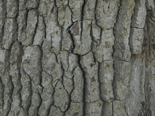 Bark Texture by Orangen Stock