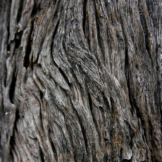 Bark Textures by Chrstopher