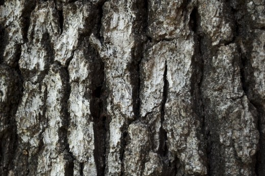 Bark by Stock Pics Textures