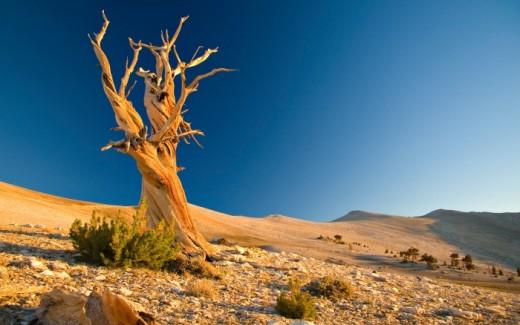 Desert Free Wallpapers