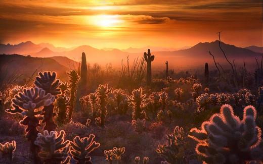Desert evening