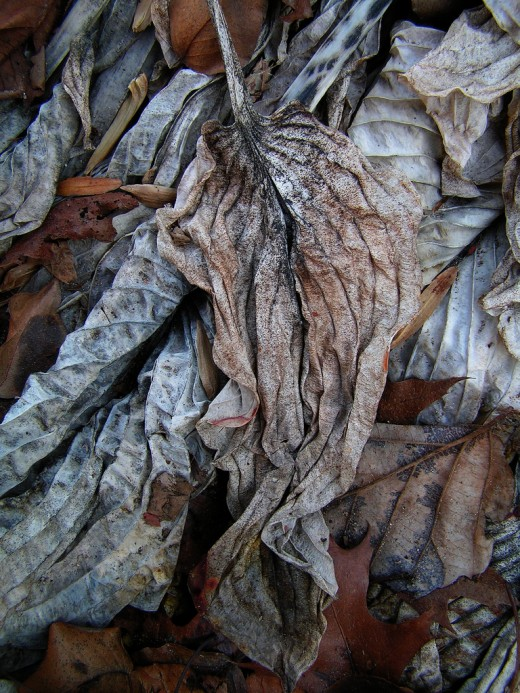 Dried Leaves Texture
