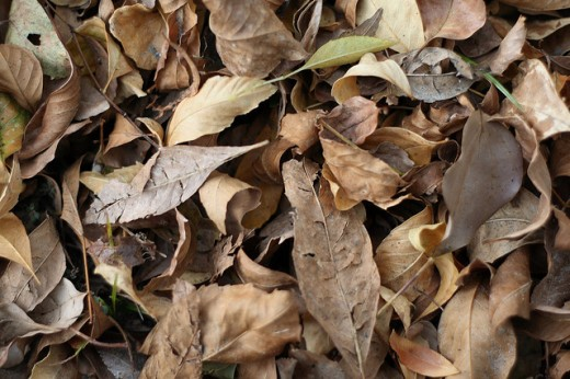 Dry Leaves by Arsheffield
