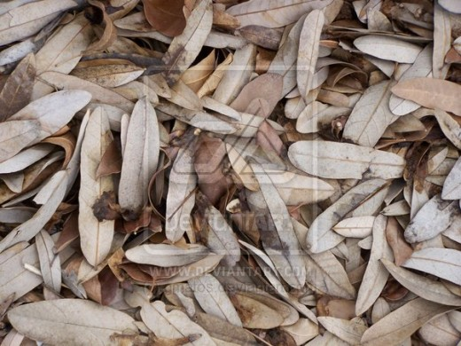 Dry Leaves by Gmatos