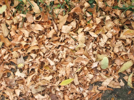 Fall Leaves Texture Stock Pic