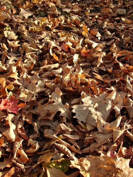 Fallen Autumn Leaves Texture
