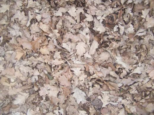 Gracies-Stock Wood Texture
