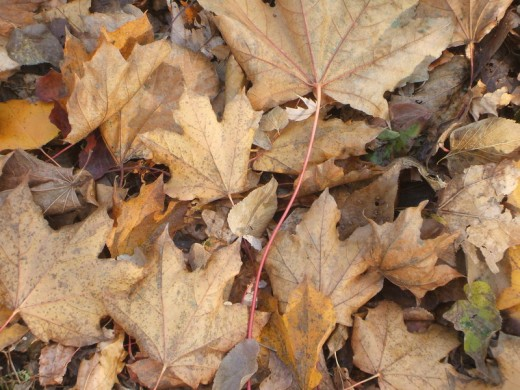 Leaves Close Up Texture
