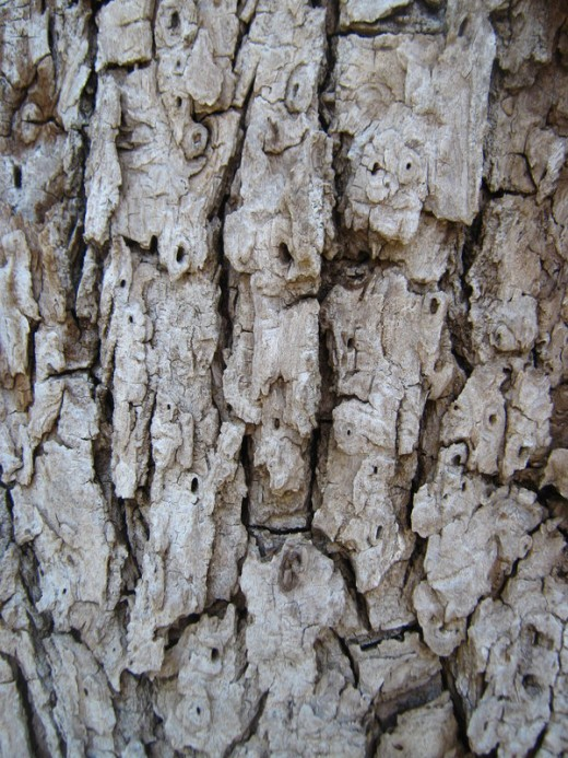 More Bark Texturess