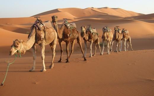 Mysterious Morocco Desert