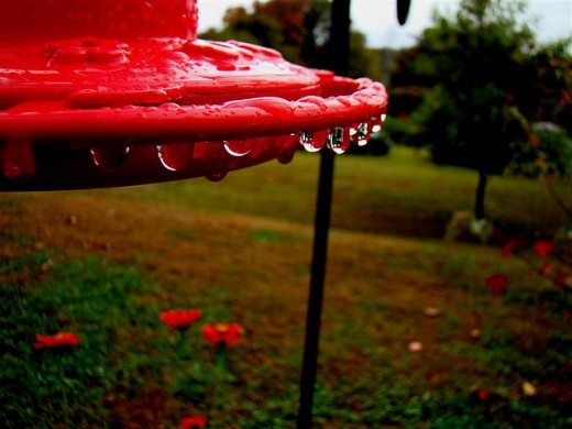 Rain drops on feeder