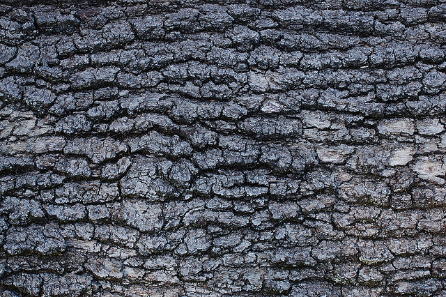 Red Oak Bark texture for layer