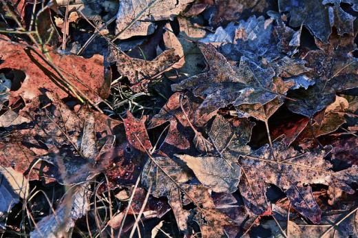 Scattered Like Dry Leaves