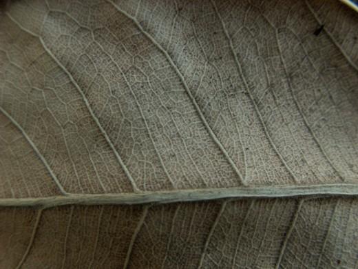 Texture Dry Leaf