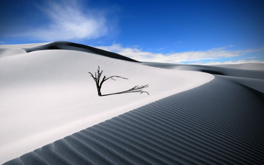 The Lonesome Dune