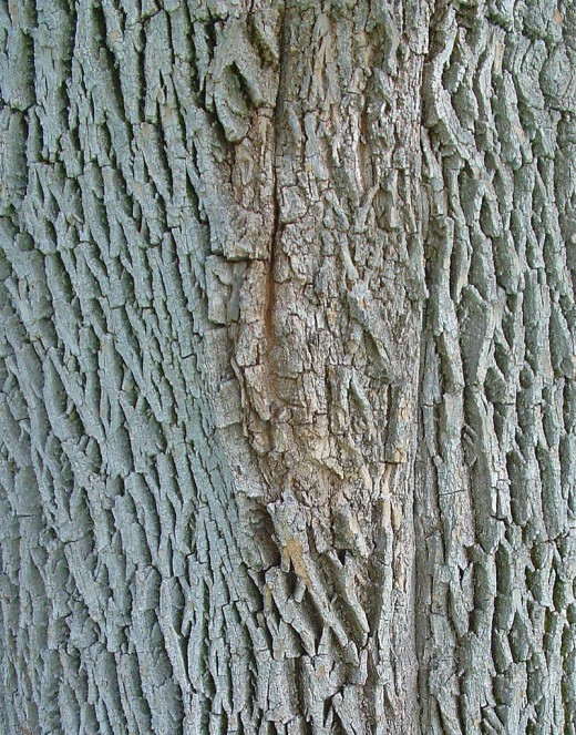 Tree Bark by Sbpoet