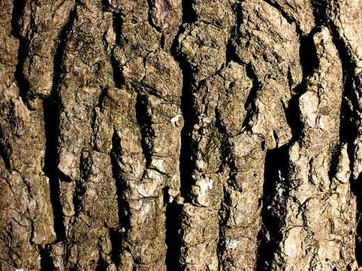 Tree bark by Form Function
