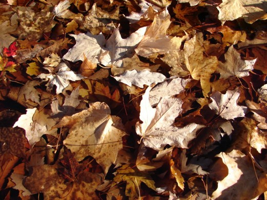 Wet Leaves Texture