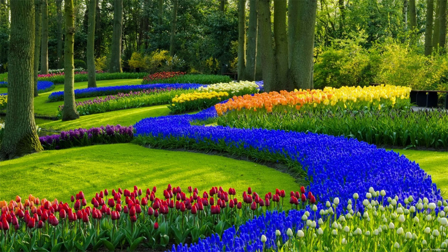 Spring Garden Desktop Wallpaper
